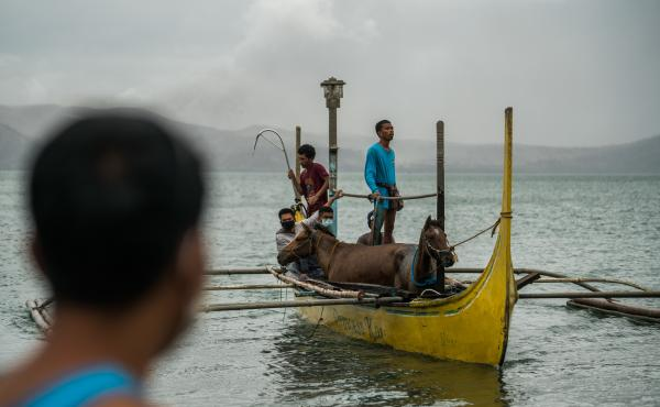 Rescued horses arrive from Taal Volcano Island via boats. About 1,000 horses were left behind on the island as residents fled Sunday's eruption.