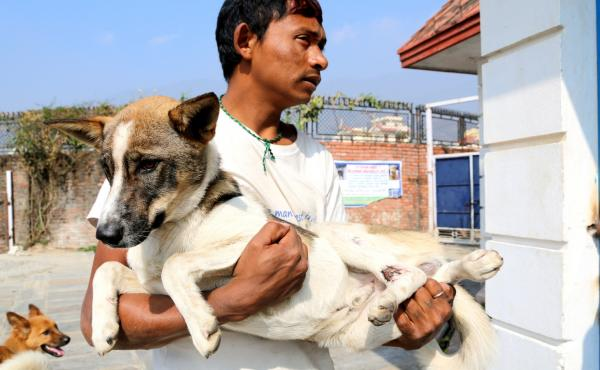 Ram Nagarkoti responds to emergency calls and brings injured dogs to the triage room at the Kathmandu Animal Treatment Centre.