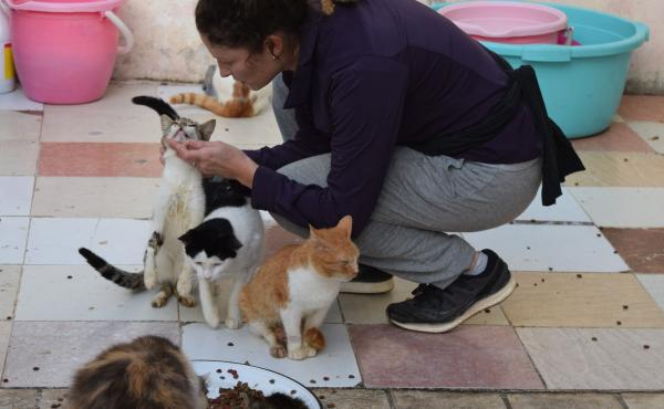 Volunteer Kaitlyn Schultz spends her Saturdays tending to some 50 cats on this Rabat rooftop.
