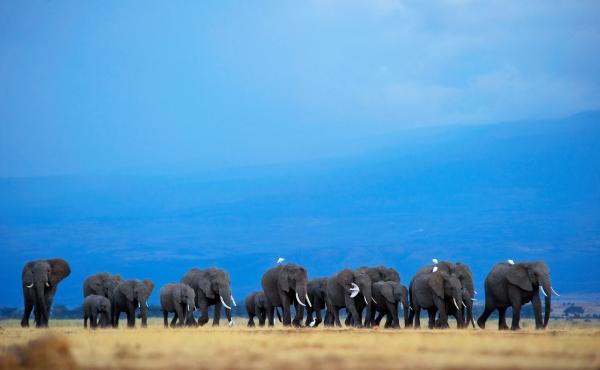 Botswana has the world's largest elephant population, with some 130,000 animals.