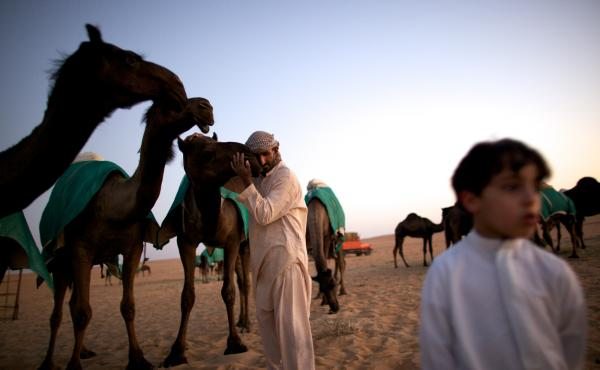 A dangerous nuzzle? A man in western Abu Dhabi hugs a camel brought in from Saudi Arabia for beauty contests. Middle East respiratory syndrome circulates in camels across the Arabian Peninsula.