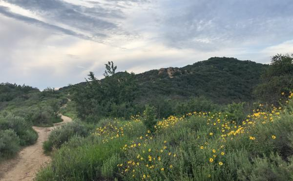 Winter rains have eased the drought in the Santa Monica Mountains National Recreation Area northwest of Los Angeles.