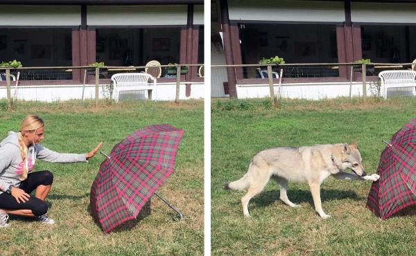 """Comparative psychologist Claudia Fugazza and her dog demonstrate the """"Do As I Do"""" method of exploring canine memory."""